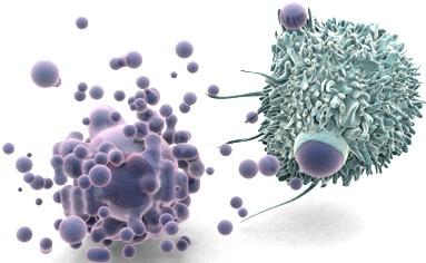 apoptose des adipocytes, des cellules graisseuses